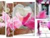 Cyclamen et fleurs de méninges